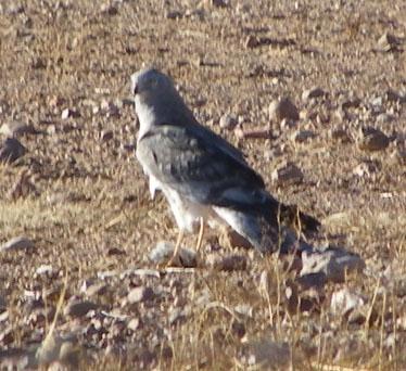 Kc Birding Walks Visitors Gallery